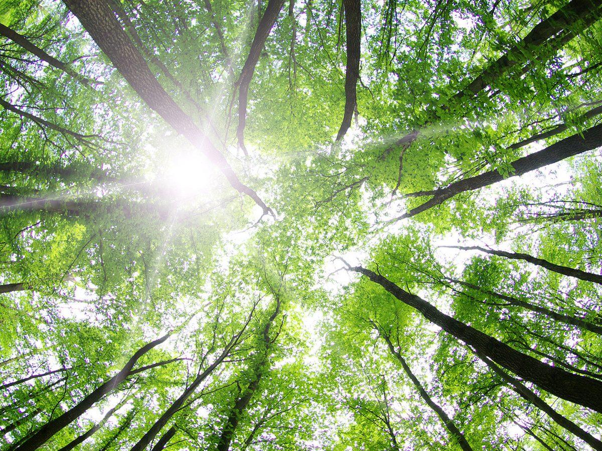 რელიგია, სულიერება და გარემოს დაცვა