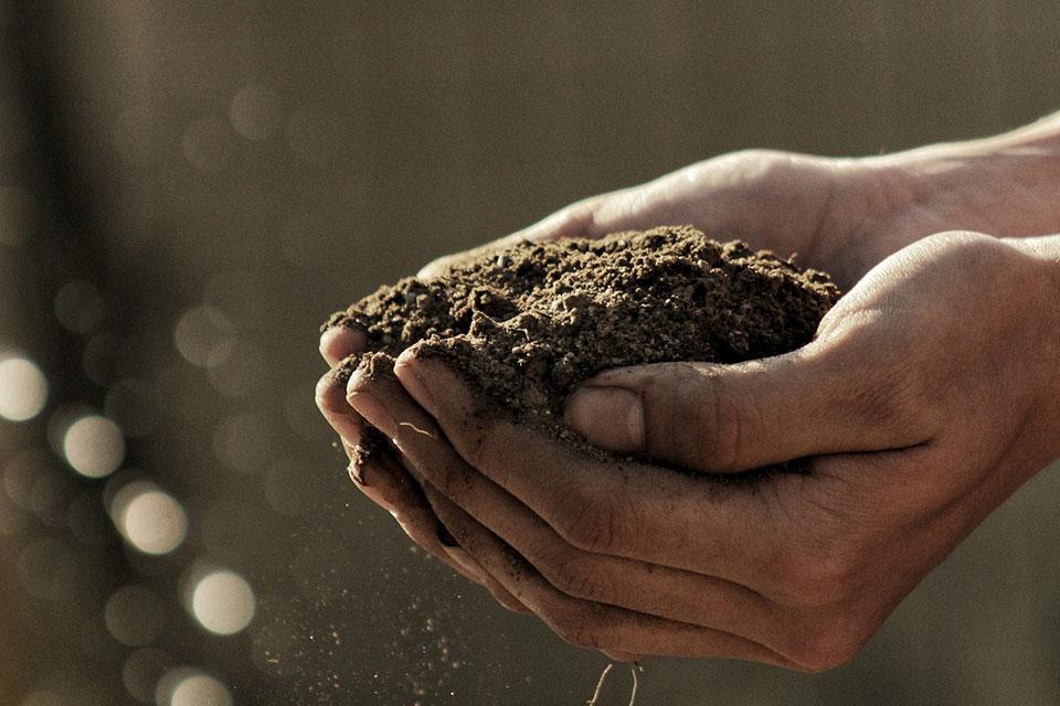 დაბინძურებული მიწის ბიორემედიაცია